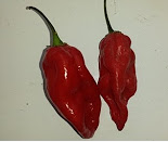 Komodo Dragon Pepper