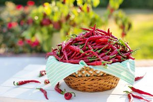 Chili Peppers Contain Capsaicin