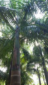 Royal Palms at Xcaret Eco Park